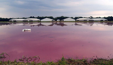 Epa to nc deq grave concerns about swine industrys intimidation hog lagoon in north carolina photodelmocreative commons thecheapjerseys Choice Image